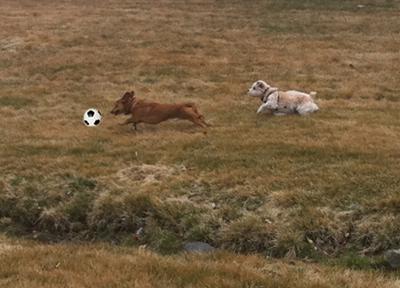 R.I.S.D. Pack Soccer