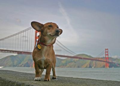 San Francisco Pacific Canine Academy