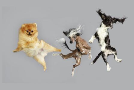 R.I.S.D. Ballet